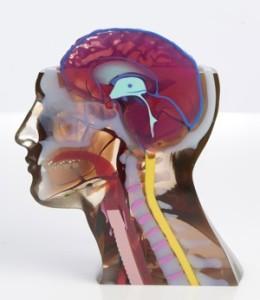 Modello anatomico stampato in 3D con la Stratasys J750